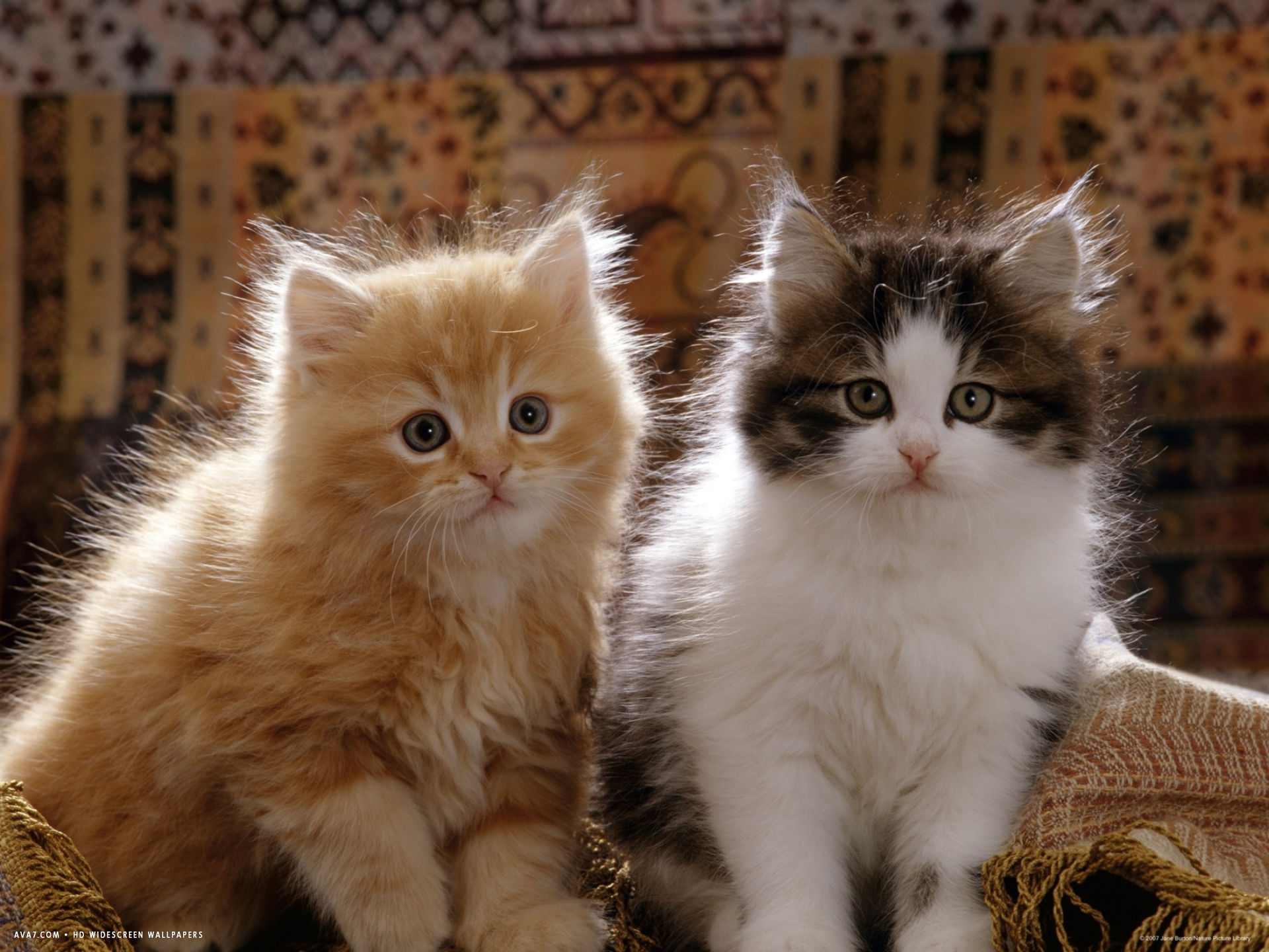 why cant you drink sea water