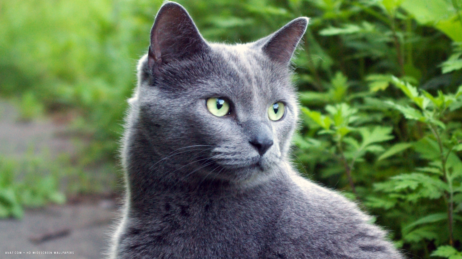 grey cat in nature